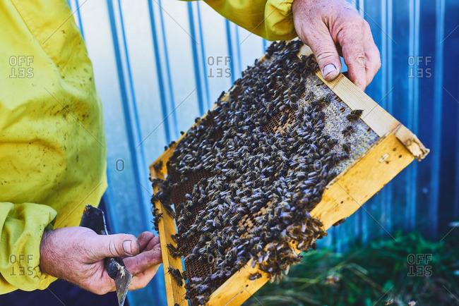 Swarm on honeycomb