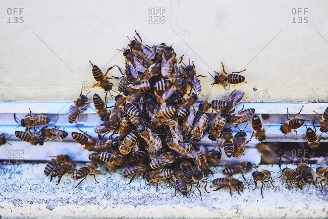 Close-up of bee colony on hive
