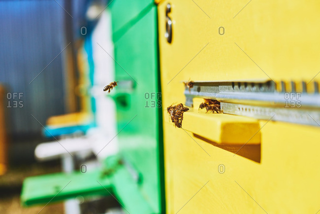 Close-up of bees flying to wooden hive at apiary