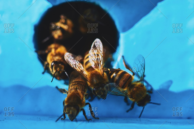 Close-up of bees crawling on wooden hive