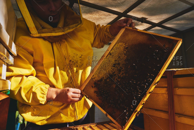 Young beekeeper removing honeycomb
