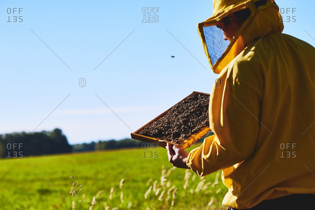 Rear view of beekeeper carrying honeycomb