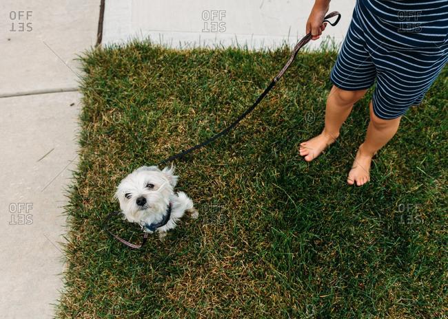 Dog on grass by a boy