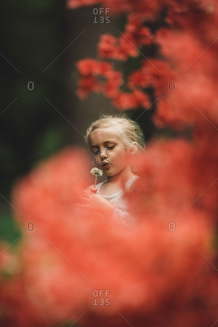 Girl with dandelions framed by branch