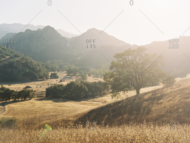 Sunset over a hilly meadow