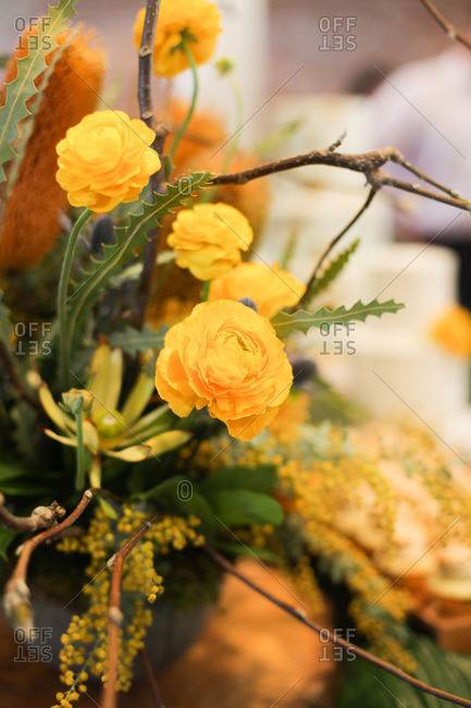 Close-up of flowers arranged in a vase