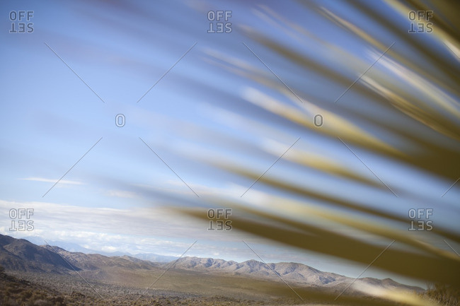 A desert plant and the mountainous landscape of Joshua Tree, California