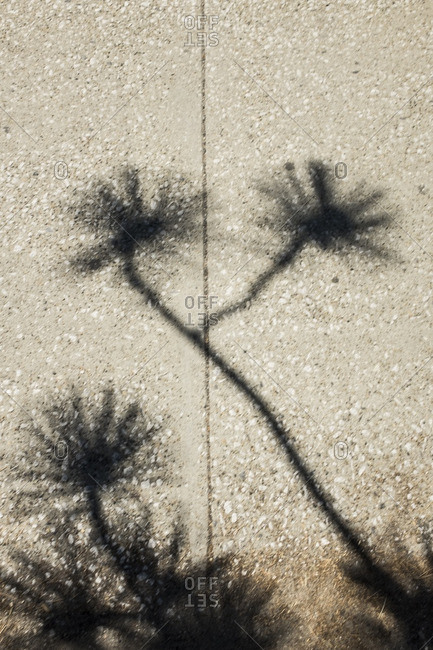 Shadow of a plant on a sidewalk