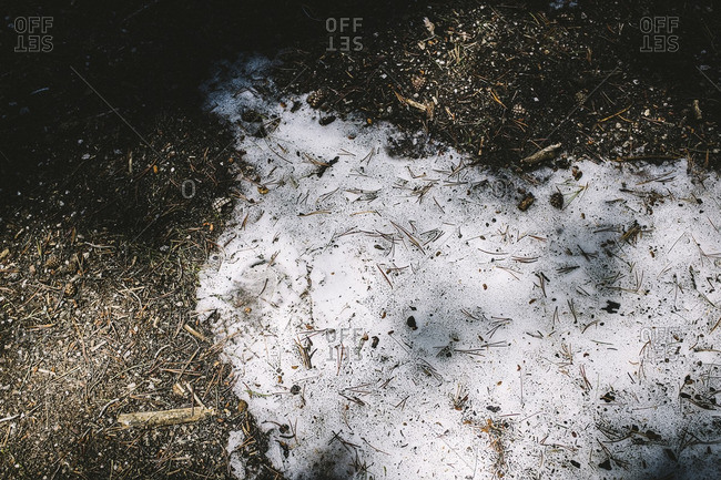 A patch of snow on the forest floor
