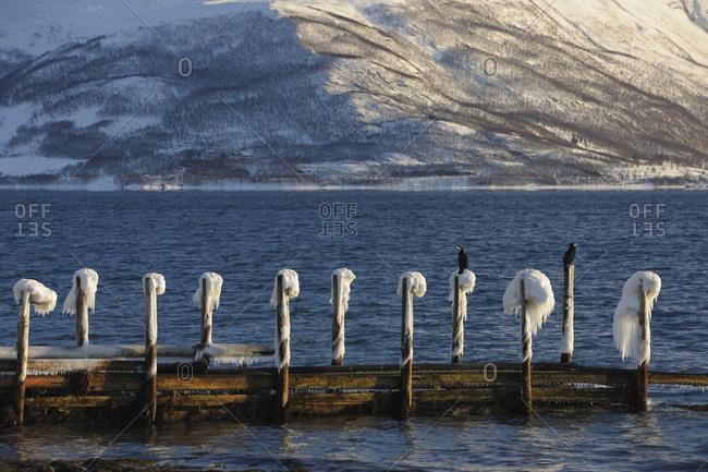 Dock in Winter, Buvik, Kvaloy, Troms, Norway