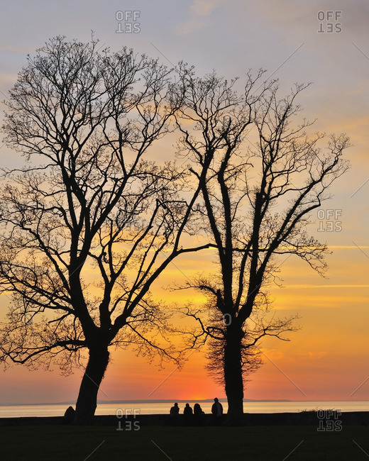 People UnderneathTrees at Sunset, Lake Constance, Lindau, Baden Wurttemberg, Germany