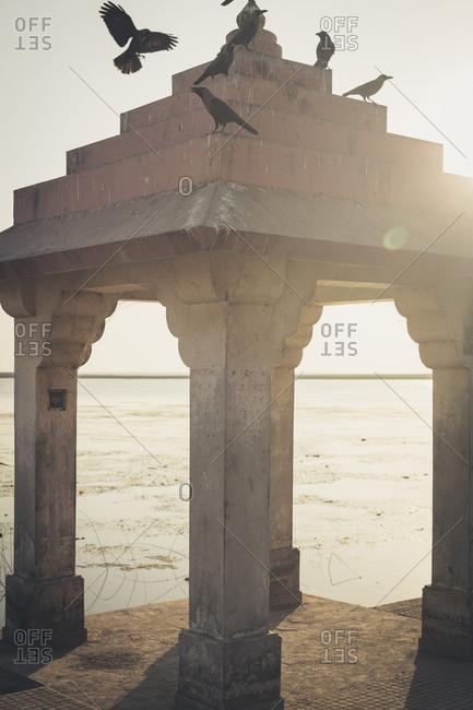 Pigeons Perched on Roof of Hindu Burning Ghat, Somnath Temple, Triveni Mahasangam, Veraval, Gujarat, India