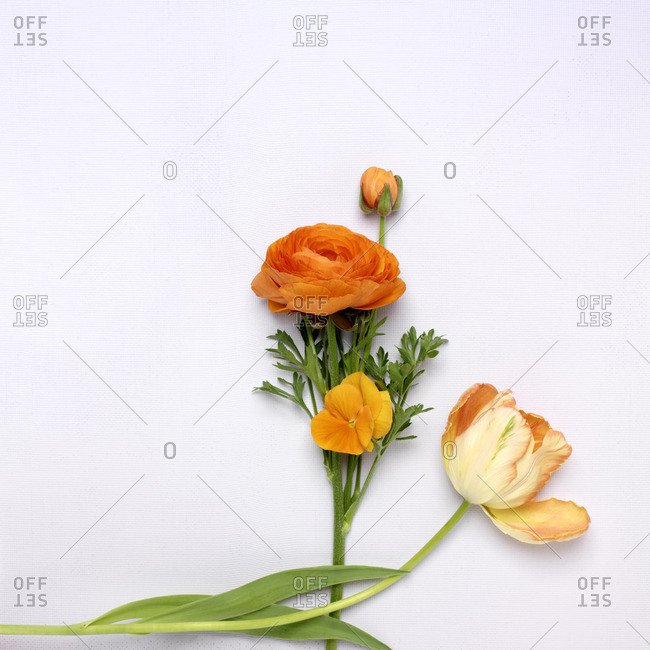 Cut Orange Flowers, Ranunculus, Pansy and Tulip