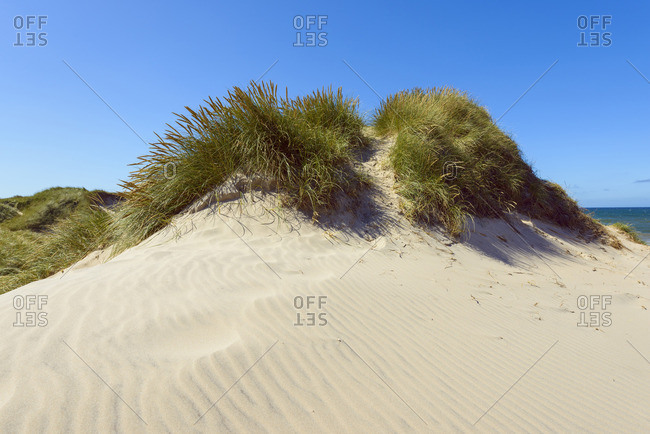 Sand Dunes, Klitmoller, North Jutland, Denmark