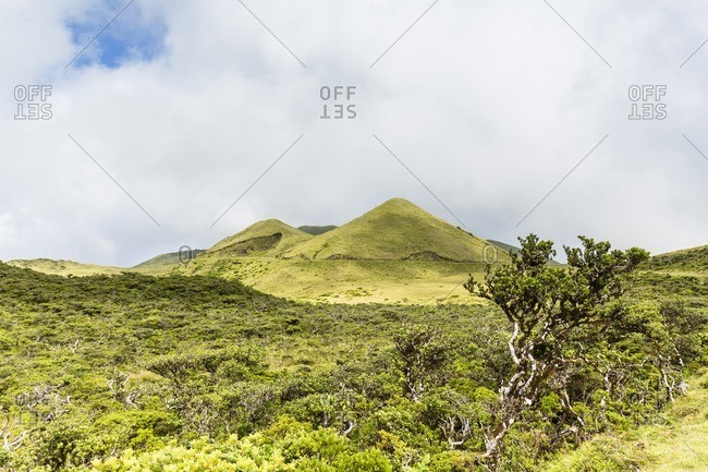 Erica azorica in front of Volcano Hills and Clouds, Pico Island, Azores, Portugal