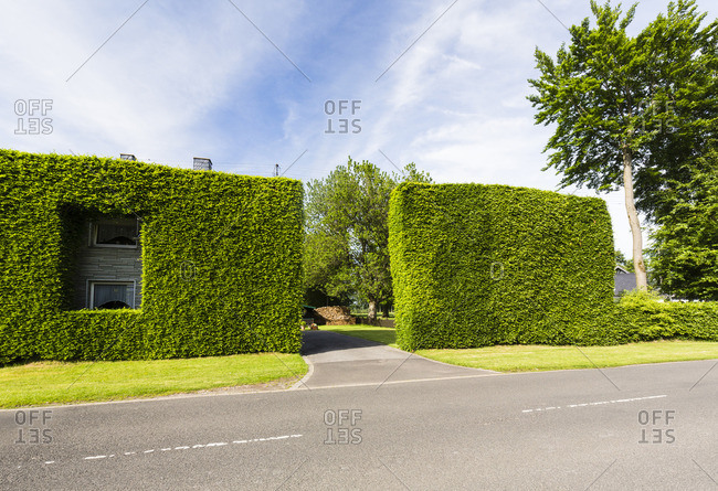Beech tree hedges forming passage to building and entrance to the Eifel National Park in Heckenland, Hoefen, Germany
