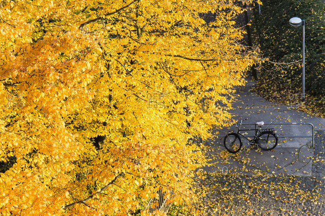 High angle view of yellow, beech tree and a bike in autumn, Cologne, Germany