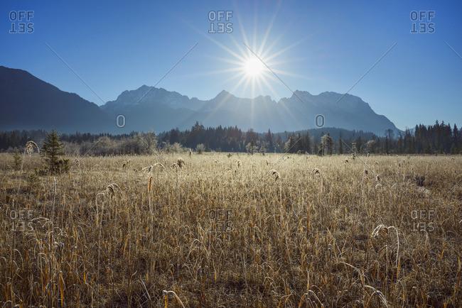 Reeds in Meadow from Lake Barmsee with Sun over Karwendel Mountain Range, Krun, Upper Bavaria, Bavaria, Germany