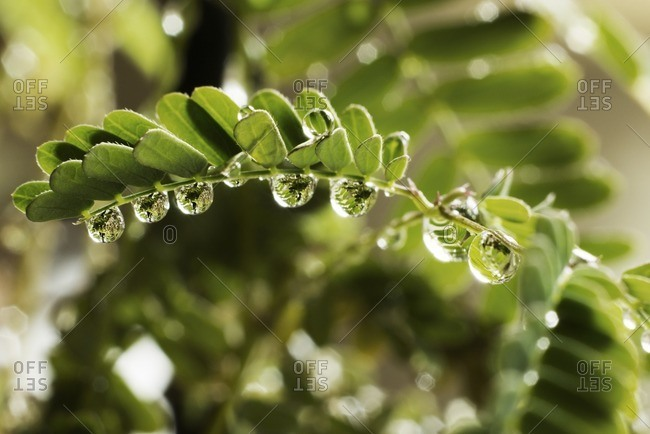 Close-up of wet twig