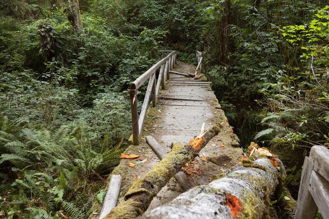 Broken bridge on forest