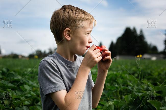 Boy eating strawberry in field