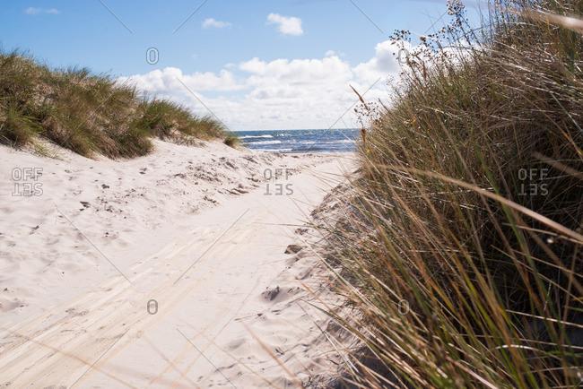 Path between grassy dunes to ocean
