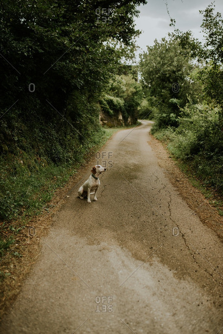 Dog sitting on country road