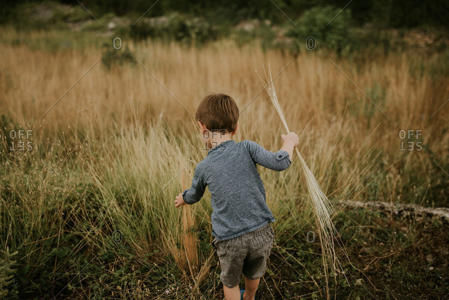 Boy picking tall strands of grass in a field