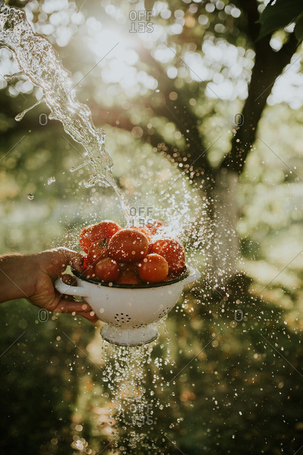 Hand holding strainer full of tomatoes being rinsed with water