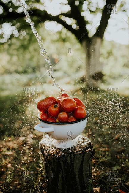 Water being sprayed on red tomatoes in a strainer