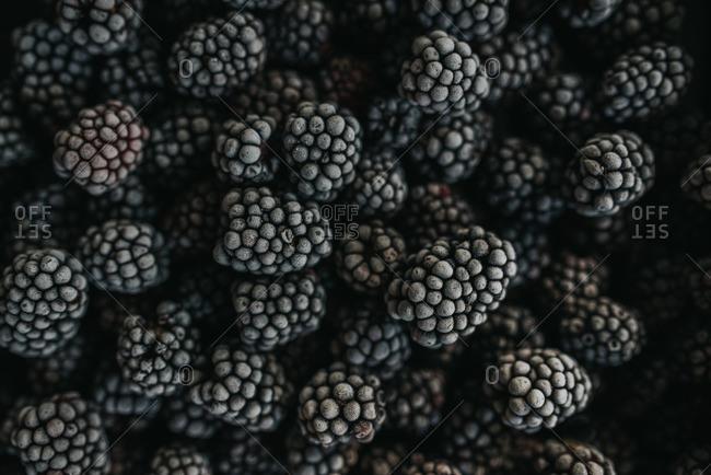 Pile of frozen, blackberries