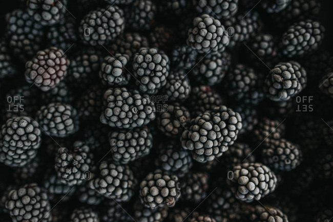 Pile of frozen, blackberries