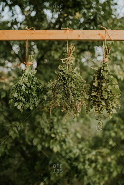 Herbs drying outdoors
