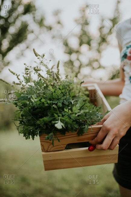 Woman carrying herbs in a wooden box