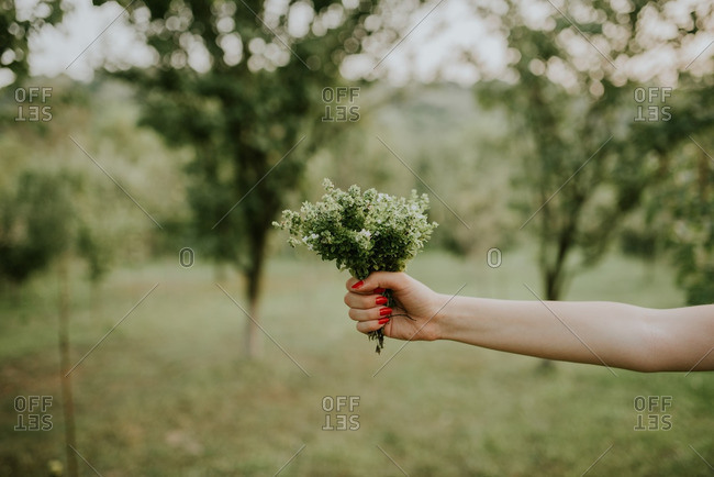 Woman holding bunch of herbs