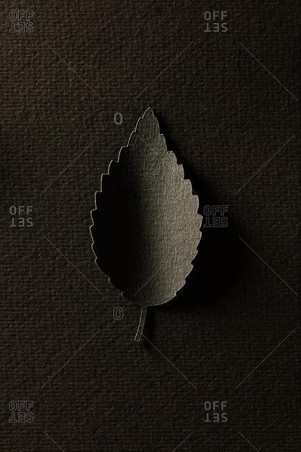 Paper cutout of a single brown alder leaf