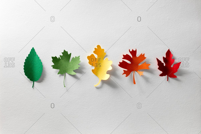 Paper cutouts of five leaves of different colors