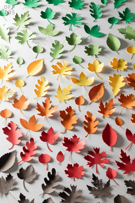 Paper cutouts of a variety of leaves in different colors