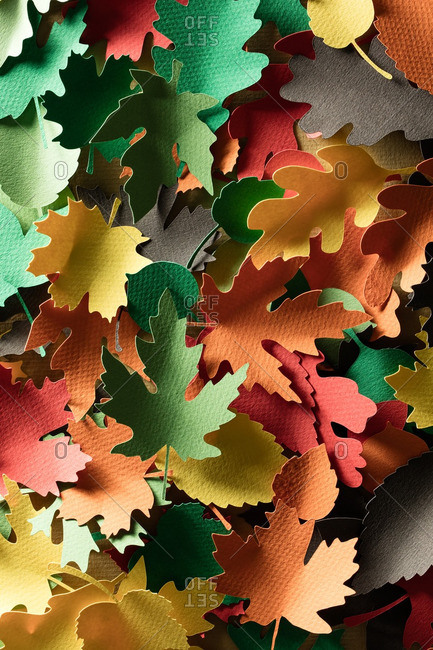 Many paper cutouts of a variety of leaves