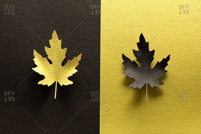 Paper cutouts of mirrored maple leaves
