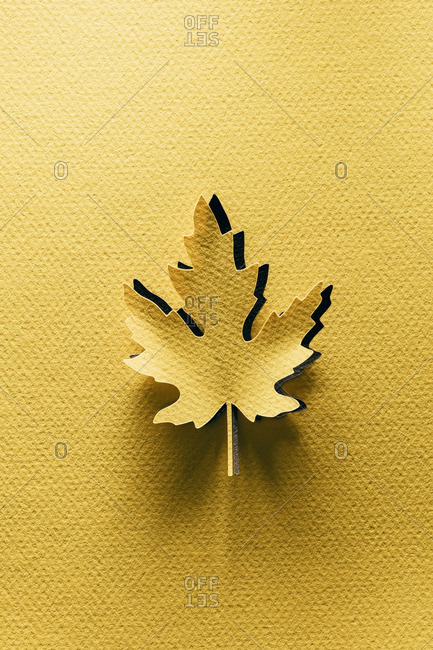 Paper cutouts of autumn maple leaves