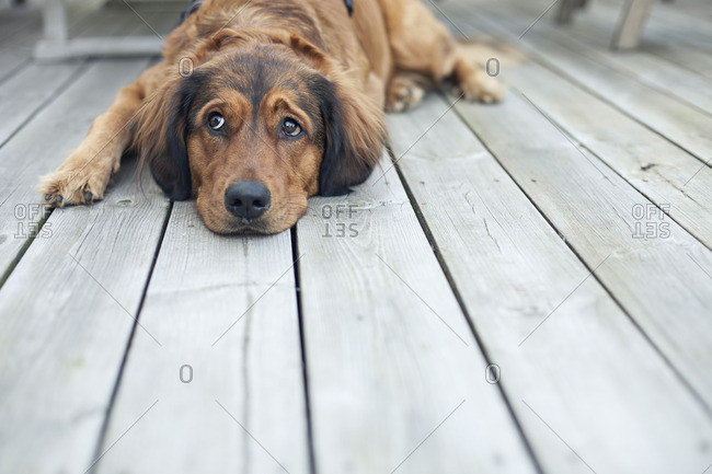 Dog lying on wooden porch