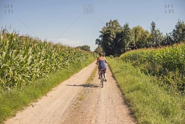 Female tourist cycling on rural path between corn fields in the Netherlands