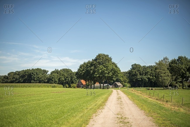 Dirt road in Dutch rural landscape with farm and corn field in the Netherlands