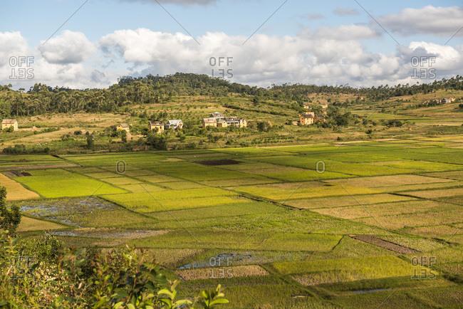 Paddy rice field landscape in the Madagascar Central Highlands near Ambohimahasoa, Haute Matsiatra Region, Madagascar, Africa