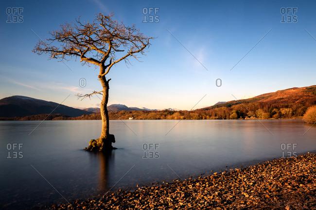 Lone tree at Loch Lomond, Scotland, United Kingdom, Europe