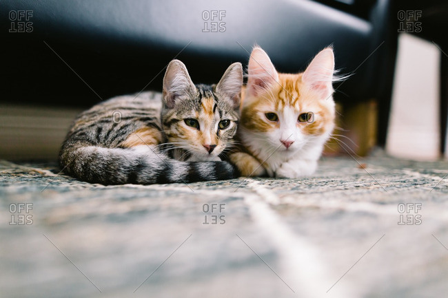 Two cats sitting side-by-side on the living room floor