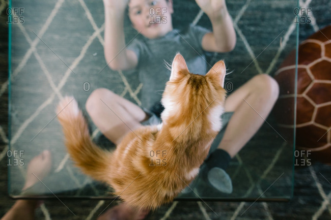 Cat sitting on a glass coffee table looking down at a boy