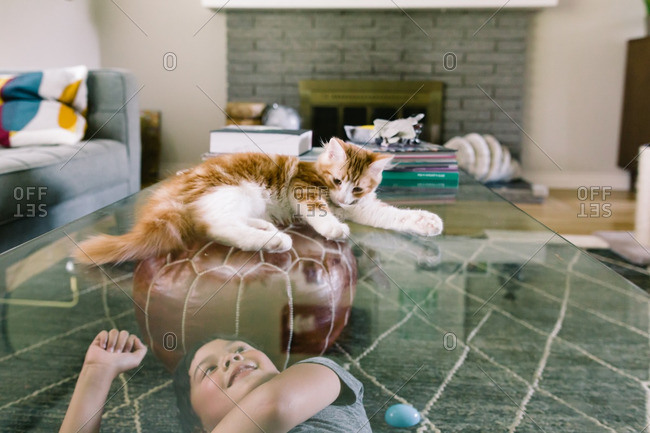 Cat sitting on a glass coffee table looking down at a young boy
