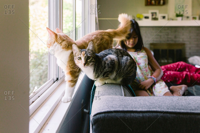Two cats sitting on a couch with a young girl